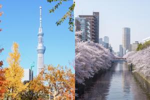東京四季天氣懶人包 每月平均氣溫及穿搭建議