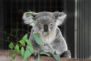 專家分享澳洲升學4大好處! 文科生升大學轉讀獸醫、藥劑一樣得
