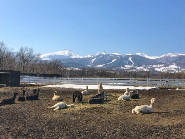 夏日親親草泥馬 日本東京近郊羊駝牧場 3