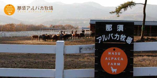 夏日親親草泥馬 日本東京近郊羊駝牧場 1