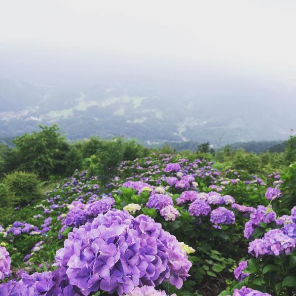繡球花/雲海/星空3大美景一次過睇晒 東京近郊秩父美之山公園 4