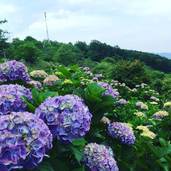 繡球花/雲海/星空3大美景一次過睇晒 東京近郊秩父美之山公園 5