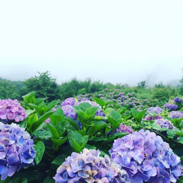 繡球花/雲海/星空3大美景一次過睇晒 東京近郊秩父美之山公園 6