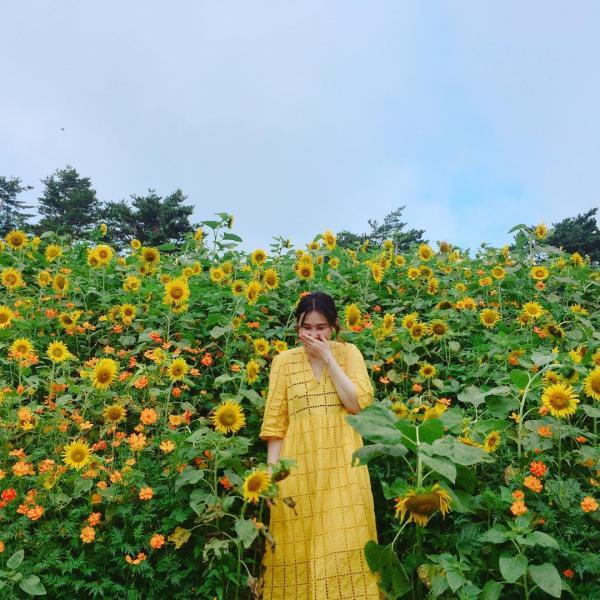 韓國最大向日葵花海! 江原道100萬朵向日葵慶典 9