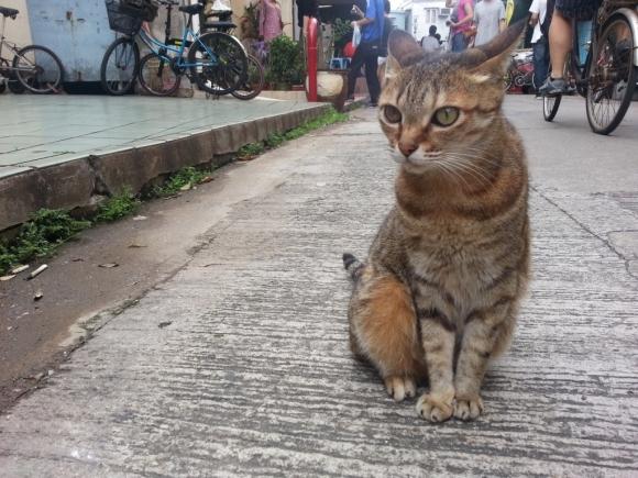 香港 大澳 原始棚屋 特色小店 地道土產 水鄉 漁村 貓星人