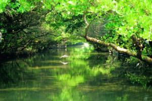 探訪紅樹林 台南高雄自然生態之旅