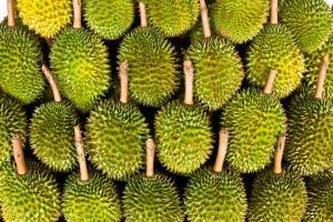 馬來西亞勁食榴槤