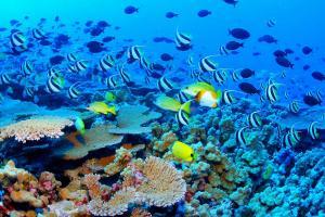 澳洲珊瑚海岸經典行程
