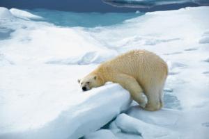 挪威群島Spitsbergen 8日之旅