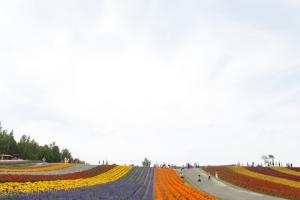 北海道富良野賞花之旅2014