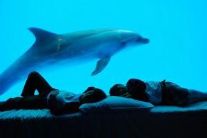 4日3夜台灣親子遊 興海豚同眠
