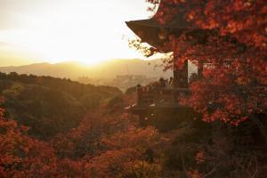 八天日本游