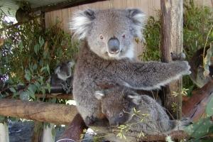 [Mr. Roo 袋鼠先生] 西澳有咩玩 之 袋鼠公園探嫻姨