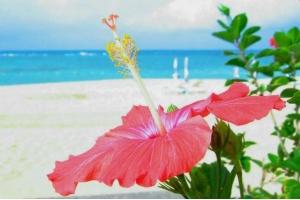 沖繩五日- 天倫樂自駕遊