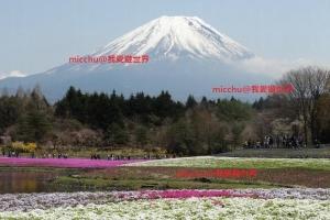 一生難忘的絕色美景 - 富士芝櫻祭