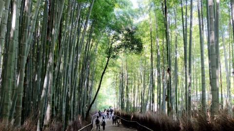 嵐山一日遊 交通/美食/行程全攻略