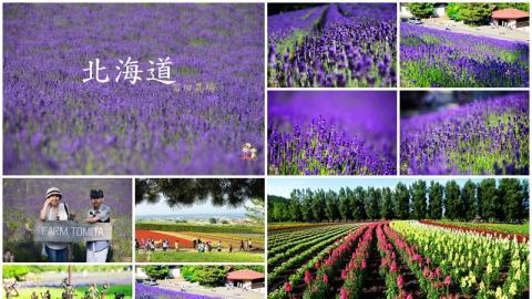 夏天就要看花田! 北海道7日6夜行程總覽