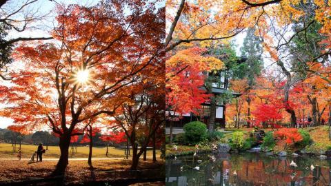 去京都大阪睇紅葉、玩埋岡山和歌山 關西11日賞楓行程總覽