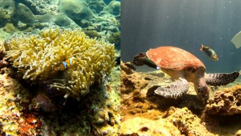【喀比自由行】泰國喀比6日陽光與海灘行程 浮潛睇海龜鯊魚/攀石/高級渡假村體驗