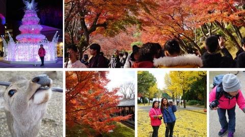 一家人去賞楓! 京都奈良4天3夜行程景點總整理