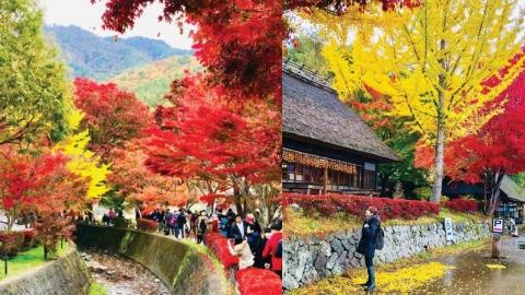 東京富士山4天賞楓之旅行程 富士山紅葉溫泉旅館/河口湖紅葉迴廊