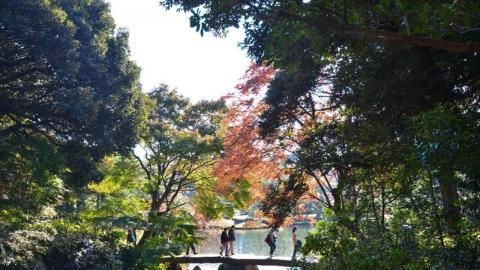 東京最美賞楓景點 六義園紅葉古蹟一日遊